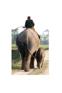 Elephants at Sapana Lodge Chitwan Nepal