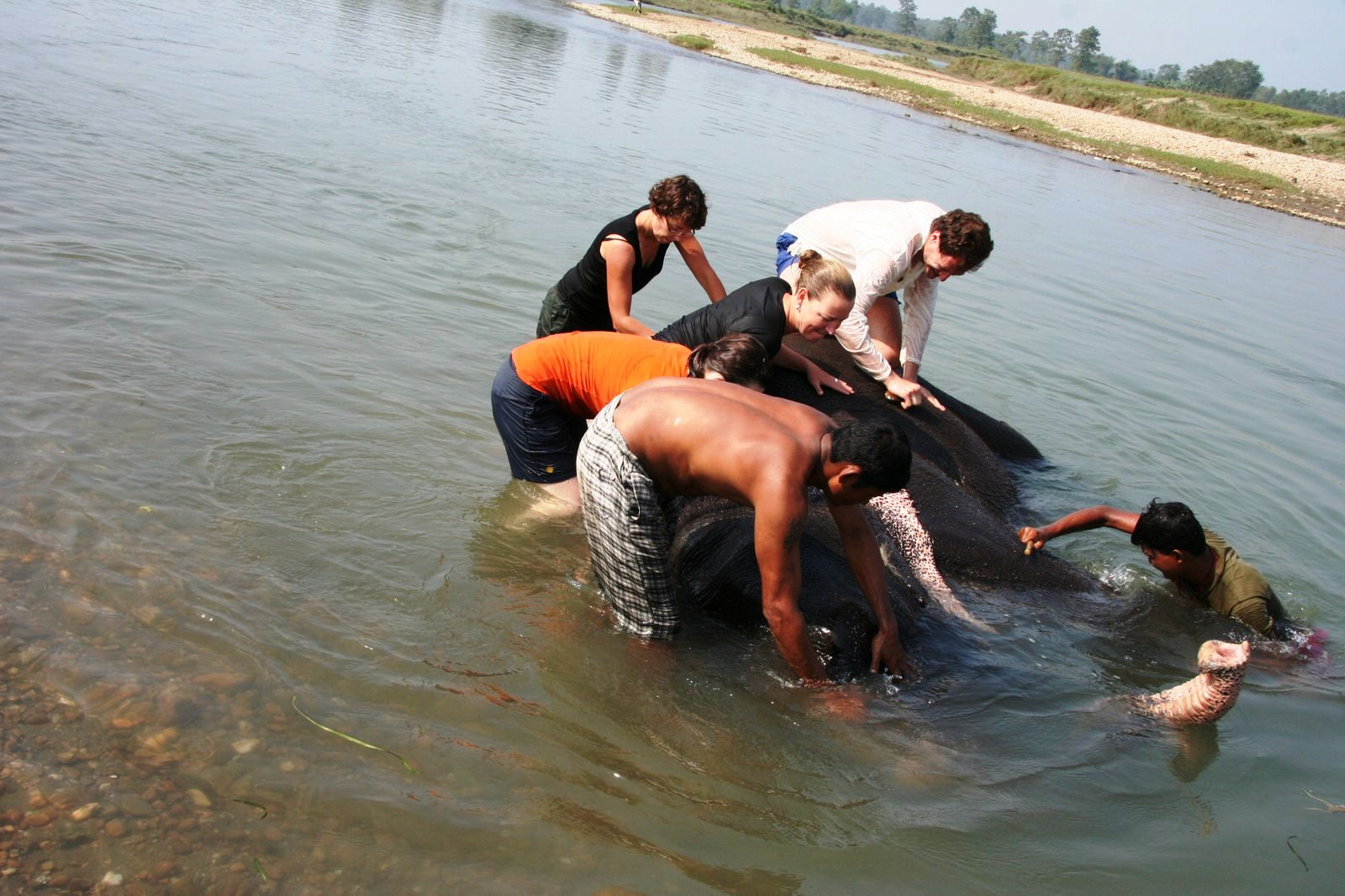 Elephant bathing at Sapana Lodge Chitwan National Park Nepal