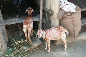 NEPAL - Chitwan National Park, local village