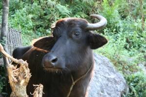 NEPAL - z Bahundandy do Syange