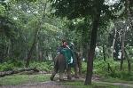 royal elephant safari sapana village chitwan park