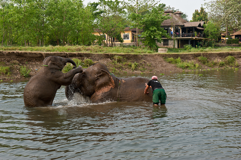 Elephant bathing at Sapana Lodge Chitwan National Park Nepal