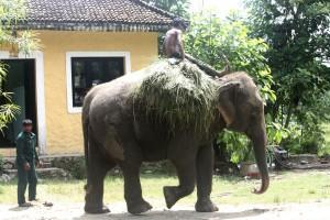 Elephant safari Sapana Lodge Chitwan Nepal