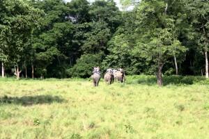 Chitwan Nepal: Wildlife and elephant safaris