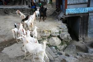 NEPAL - Bahudandd