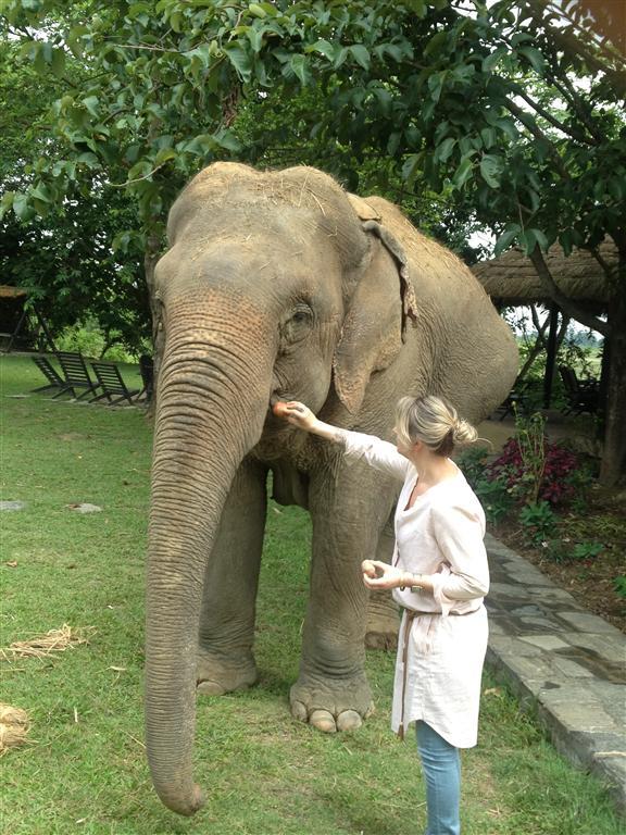 pregnant elephant at sapana village lodge chitwan Nepal