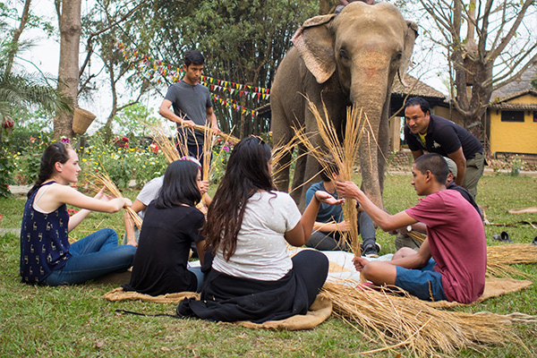Hotel Nepal with own Elephant and baby elephant - Sapana Lodge