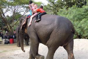 Elephant Safari by Sapana Lodge Chitwan Nepal