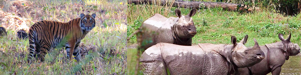 Tours & Excursions by Sapana Lodge Chitwan Nepal