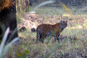 Jungle Safari by Sapana Lodge Chitwan Nepal