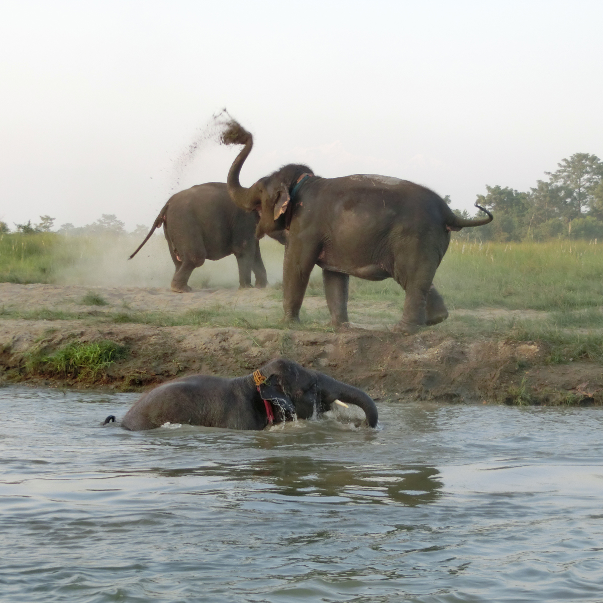 Elephant Safari by Sapana Lodge Chitwan Nepal