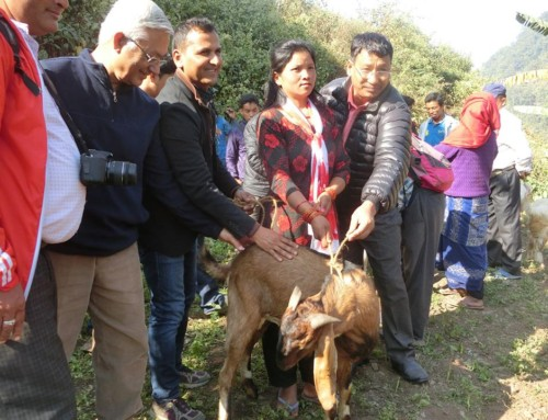 The male goat distribution program organized by Sapana Village Lodge in Siddi Chepang villages