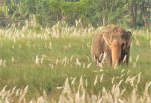 Elephant Nepal - Chitwan - Hotel Sapana Lodge
