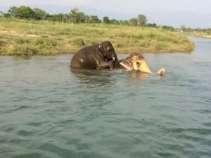 Elephant & Elephant back tours in Chitwan - Nepal: Sapana Lodge