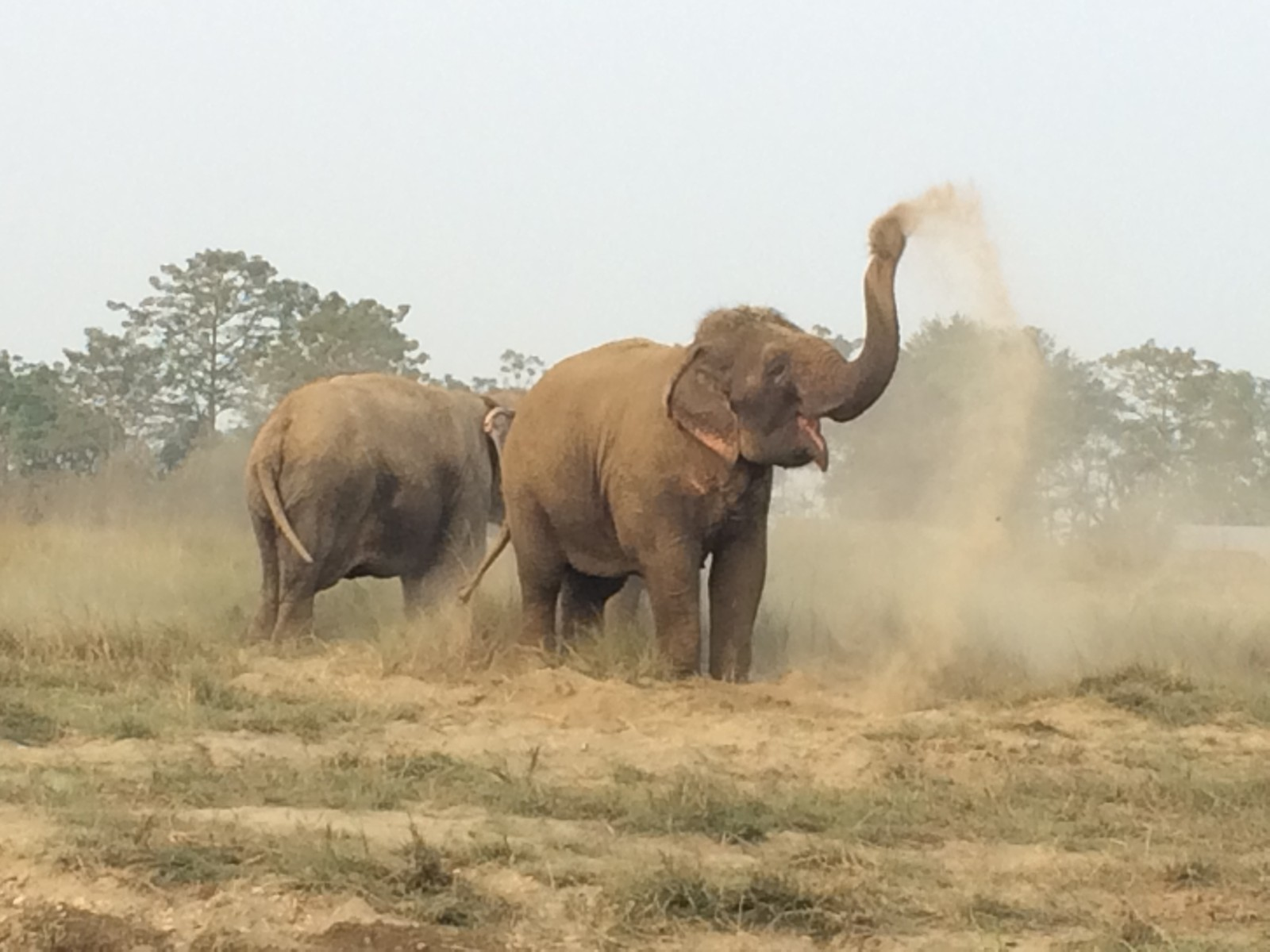 Elephant & Elephant back tours in Chitwan - Nepal: Sapana Lodge