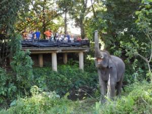 Elephants Chitwan Nepal at Sapana Lodge