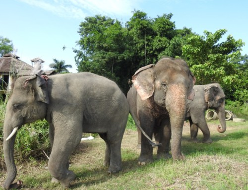 Elephant responsible tourism