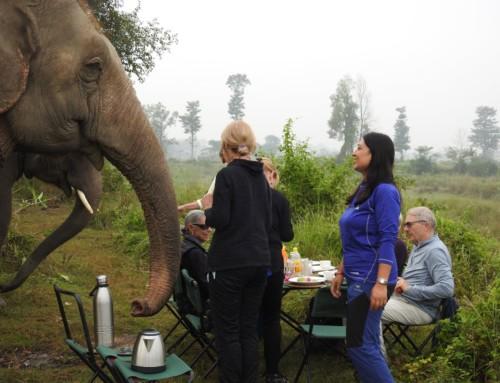 Sunrise bush walk & breakfast in Bush with elephants